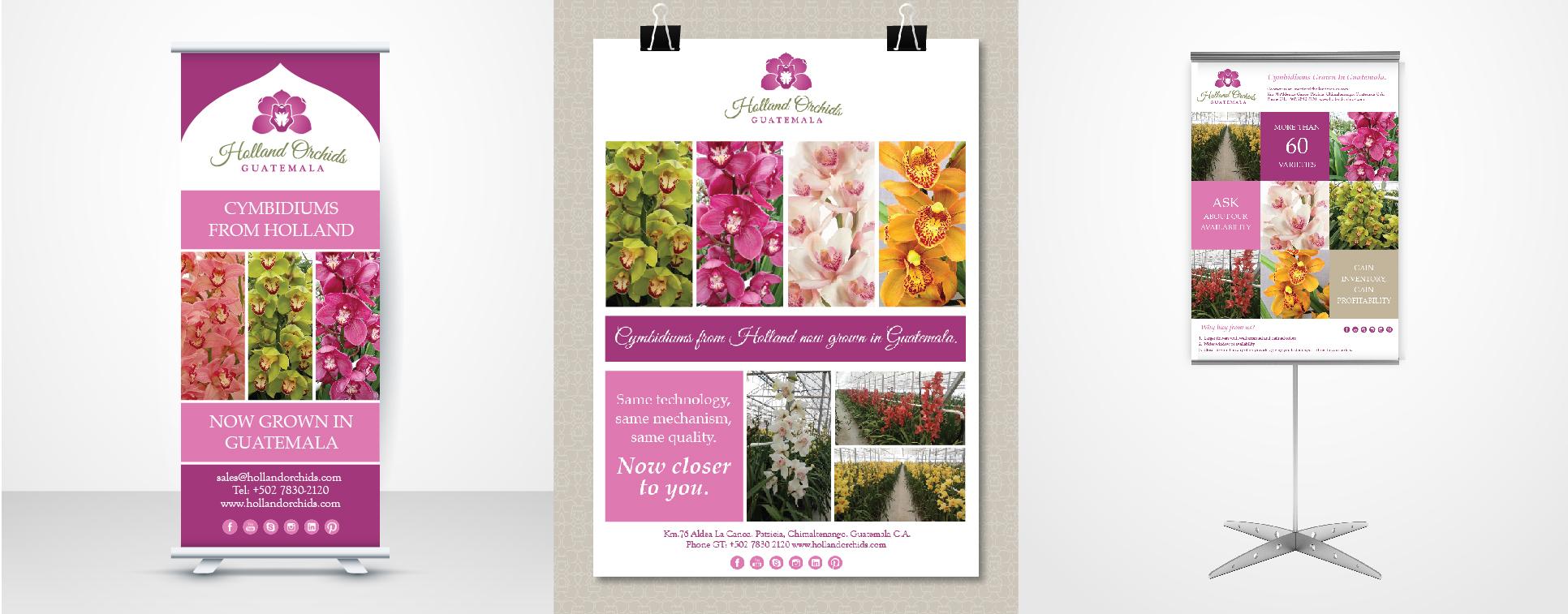 Flyer para orquideas holandesas de exportacion